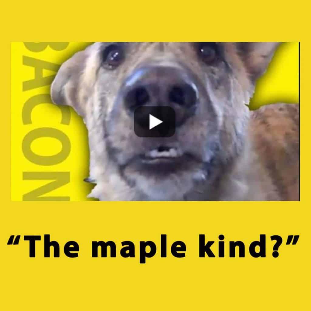 Bacon dog video